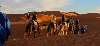 Camel caravan, Morocco