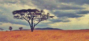 Tree in Tanzania
