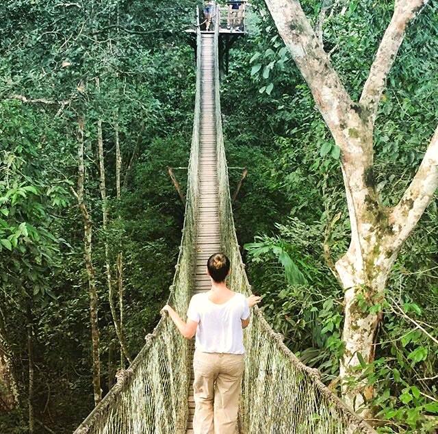 Canopy bridge in the jungle
